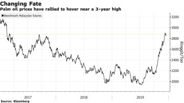 Palm oil prices have rallied to hover near a 3-year high