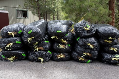 Bags of pine needles await collection from the city. Homeowners rake the needles to reduce the risk of fire danger.