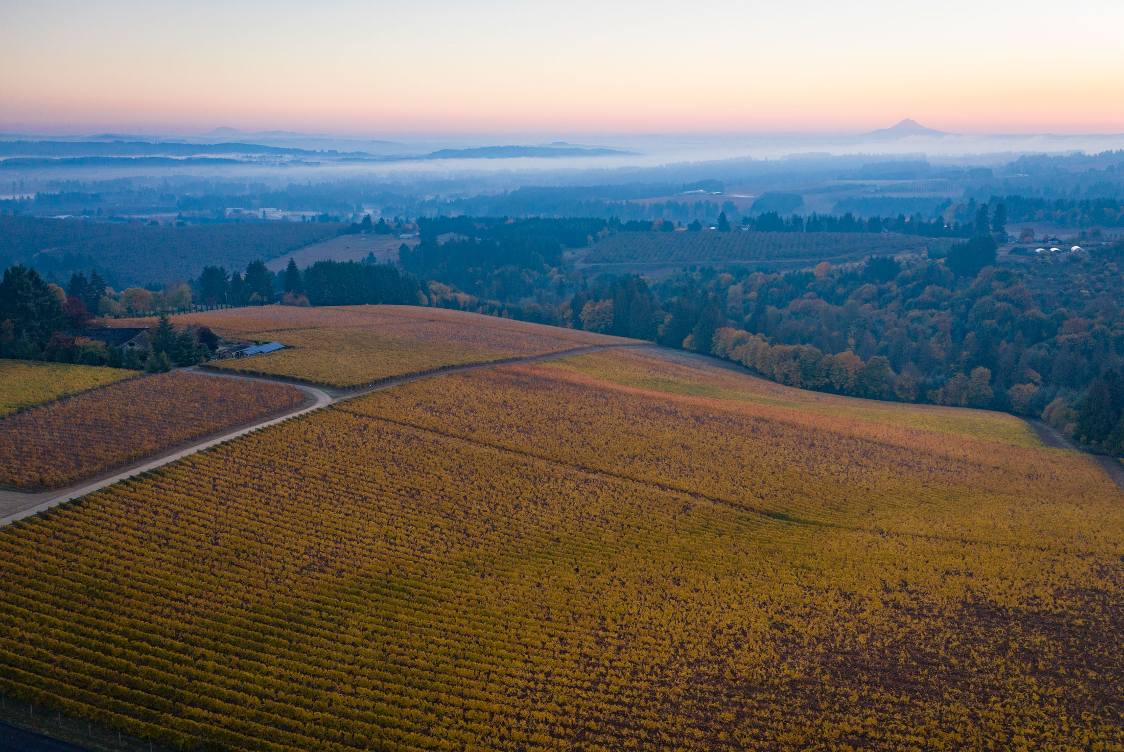 relates to Posh French Winemakers Pounce on Big American Vineyard Selloff