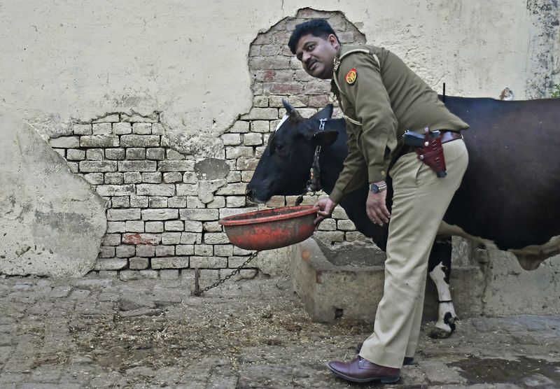 Javed Khan, SHO (Station House Officer) of a Police is pictured by a cow adopted by him near his residential quarter in  Aligarh, Uttar Pradesh,