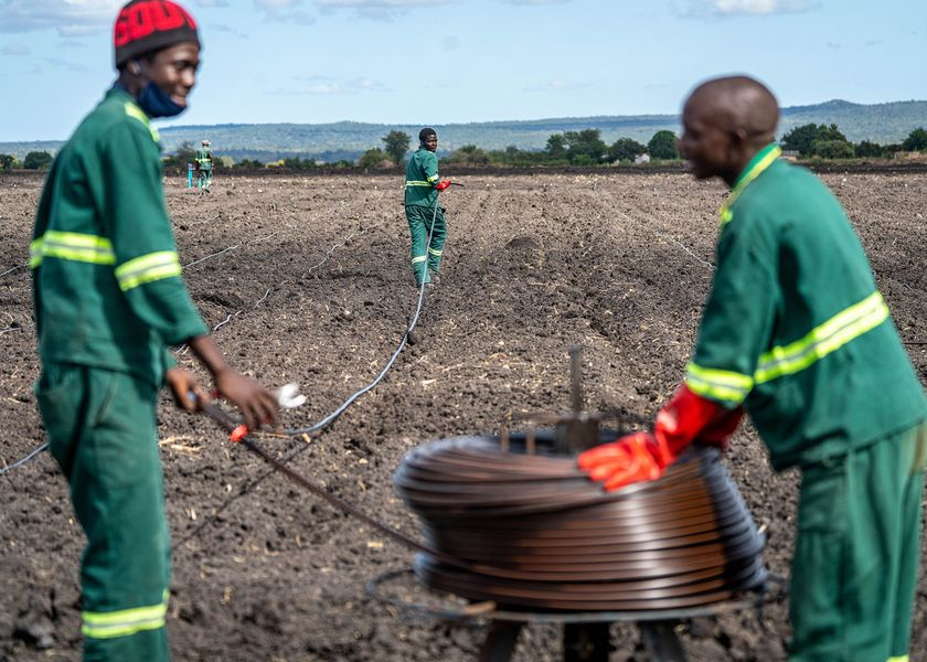 relates to An Ethanol Plant in Zimbabwe Is Expanding, Despite Its Critics