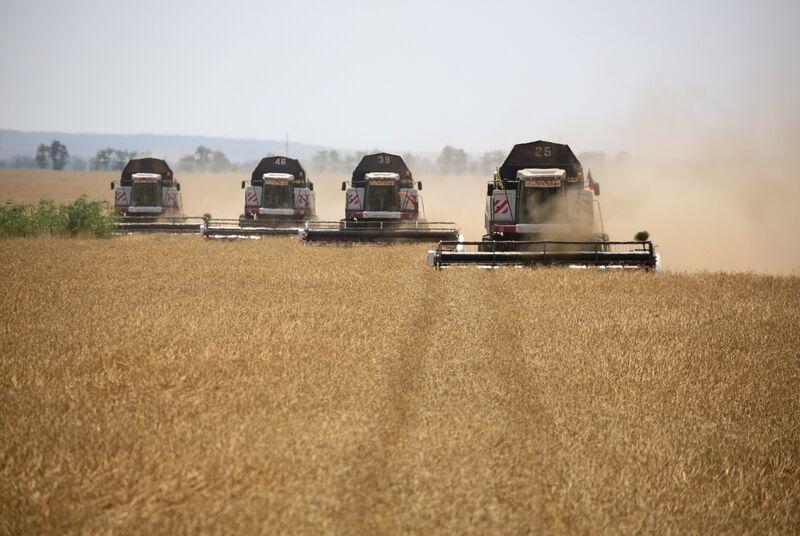 Russian Wheat Harvest Helps Ease Global Grain Shortfall
