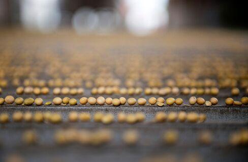 Soybean harvest.