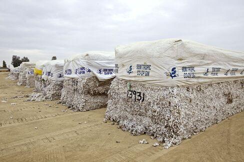 Cotton Rally Peaking as Farms Replenish Stocks