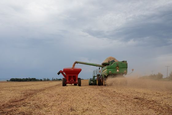 March Rains Sound Alarm of Crop Loss in Brazil Soybean Belt