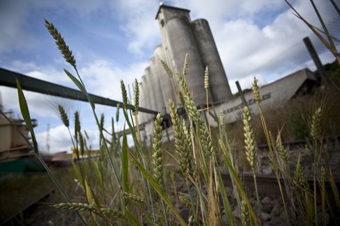 France Tops U.S. in Wheat as Premium Seen Widening to Record