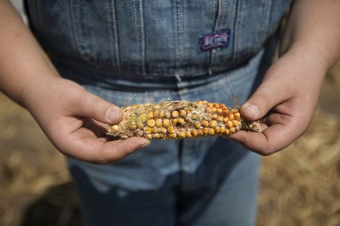 Bull Market in Crops Extends With Spreading Drought