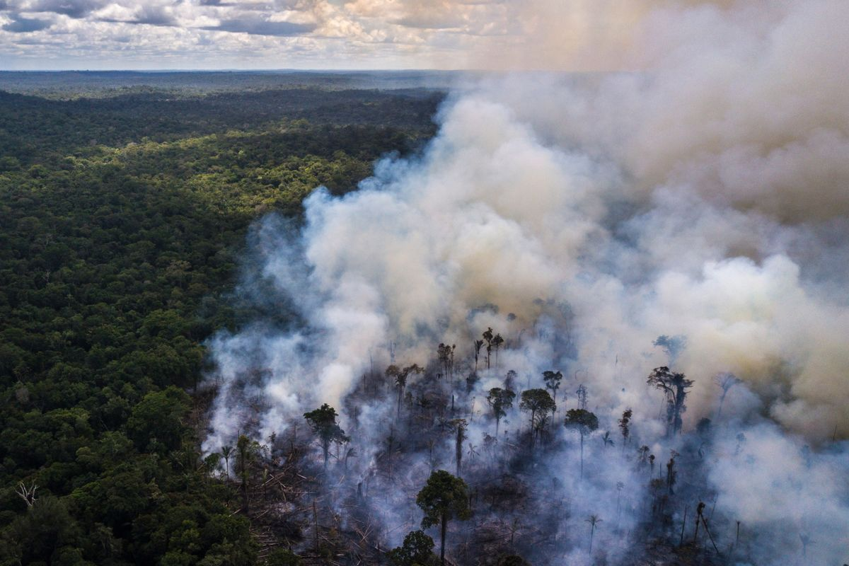 Brazil Burns Billions of Carbon Credits in Amazon Rout, CEO Says