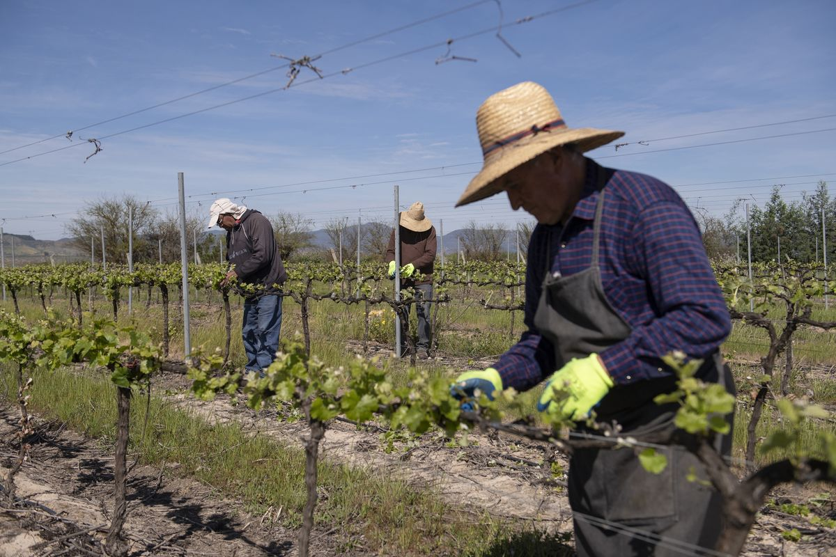 bloomberg.com - Alejandra Salgado - Chilean Raisins Are Latest Crop Hit by Extreme Weather