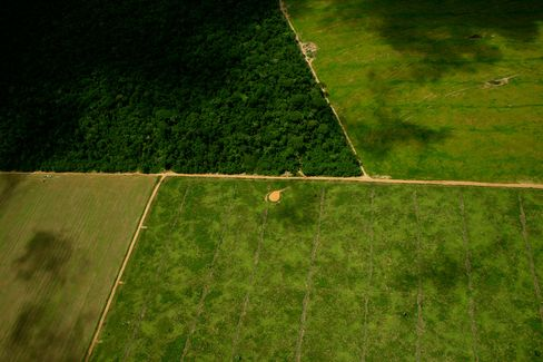 Soybean fields intersect with rainforest in Mato Grosso, Brazil.