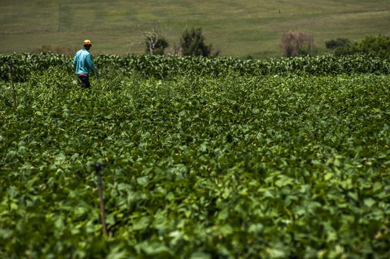 South African Panel Seeks More Time to Weigh Land Policy Changes