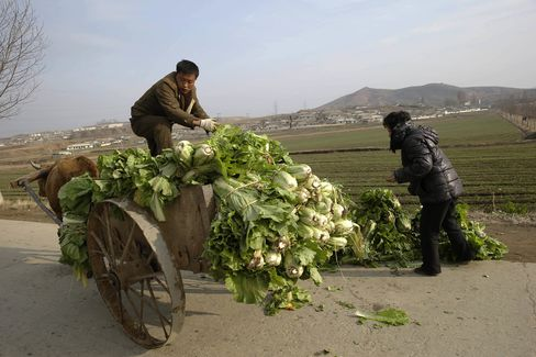 A farmer sorts out cabbage in preparation for the making of Kimchi near the town of Sinchon in South Hwanghae province.