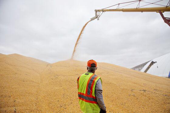 Trump's Trade War Is Driving Soybean Farmers to Corn