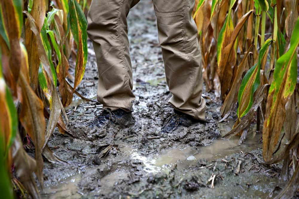 Midwest Deluge Frustrates Farmers at Harvest Time