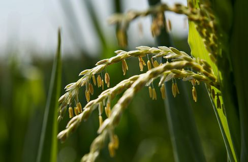 Breadbaskets of Last Resort See Once-in-a-Lifetime Crop Prices