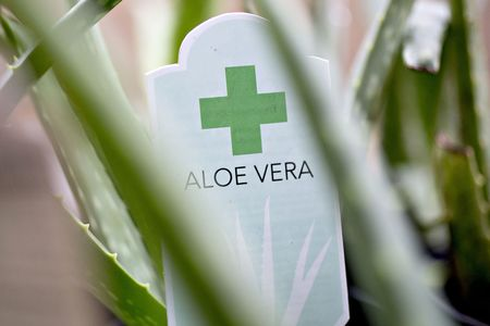 No Aloe Found in Aloe Vera Gels from Walmart, CVS, Target