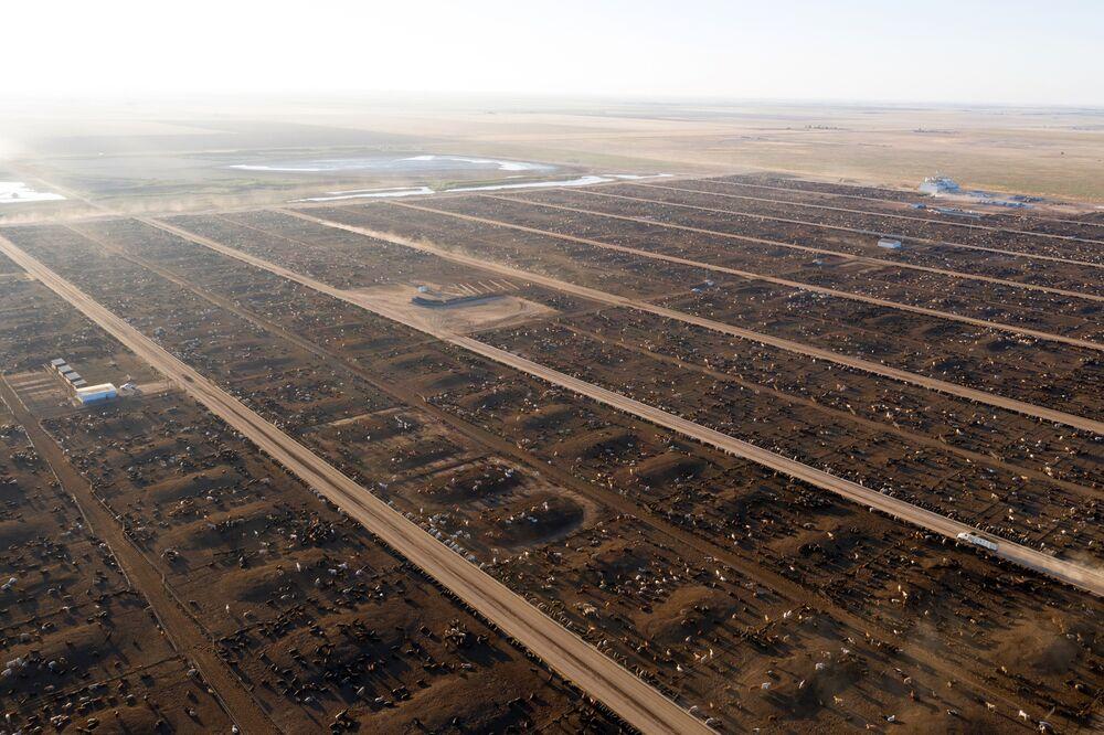 Cattle farming texas REDUX NYT