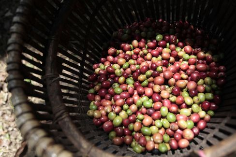 Coffee Shipments From Indonesia Seen Plunging to Two-Year Low