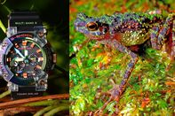 relates to Thought Extinct, a Rainbow-Colored Frog Inspires a Pretty Snazzy G-Shock