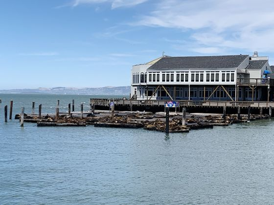 Down on Fisherman's Wharf, the Sea Lions Bark at Empty Piers