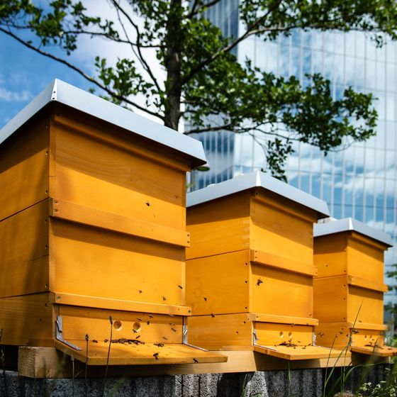 ECB Installs Insect Hotels and Bat Houses in Biodiversity Drive
