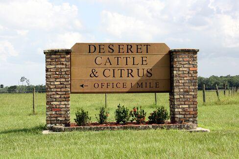 The entrance to Deseret Cattle & Citrus, St. Cloud, Fla.