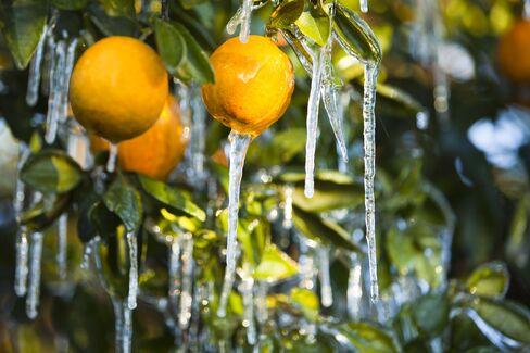 Iced Oranges