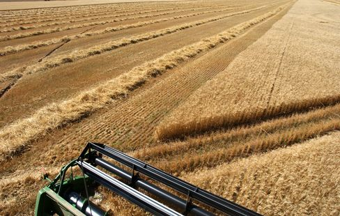 Afrikaners Reaping Colorado Wheat Threatened by Visa Cap
