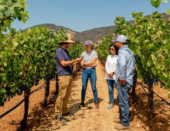 The Hectic Day in the Life of a Napa Winemaker During Harvest