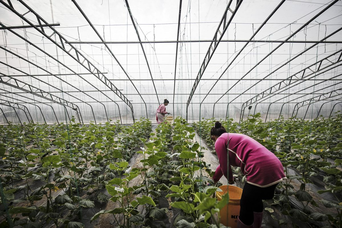 Tainted Food Fear Spurs New Breed of Chinese Farmer - Bloomberg