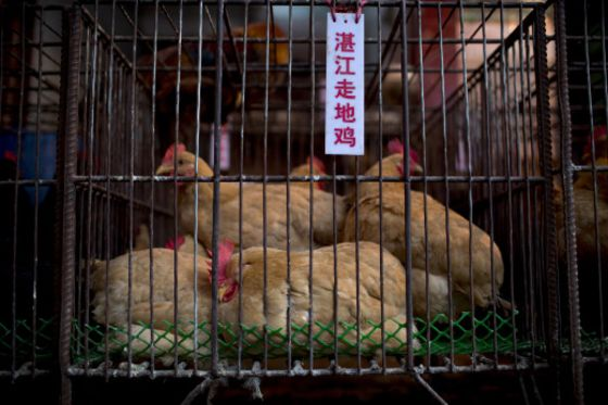 Deadly Virus Finds a Breeding Ground in China's Food Markets