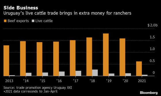 New Zealand's Live Cattle Retreat Gives Uruguay an Opening