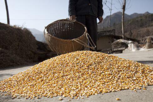 Corn in Hubei Province