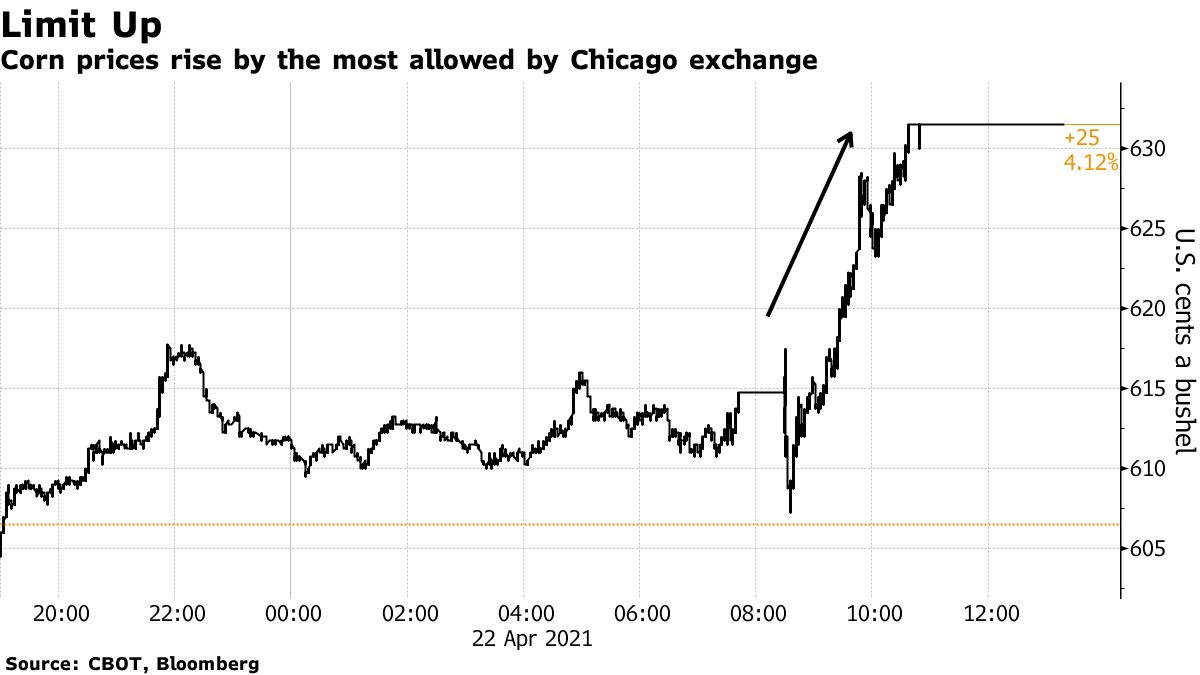 Corn prices rise by the most allowed by Chicago exchange