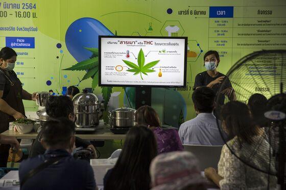 Thai Families Can Grow Six Pots of Cannabis Each as Rules Eased
