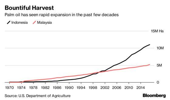 New Dwarf Trees Set to Revolutionize Palm Oil Market