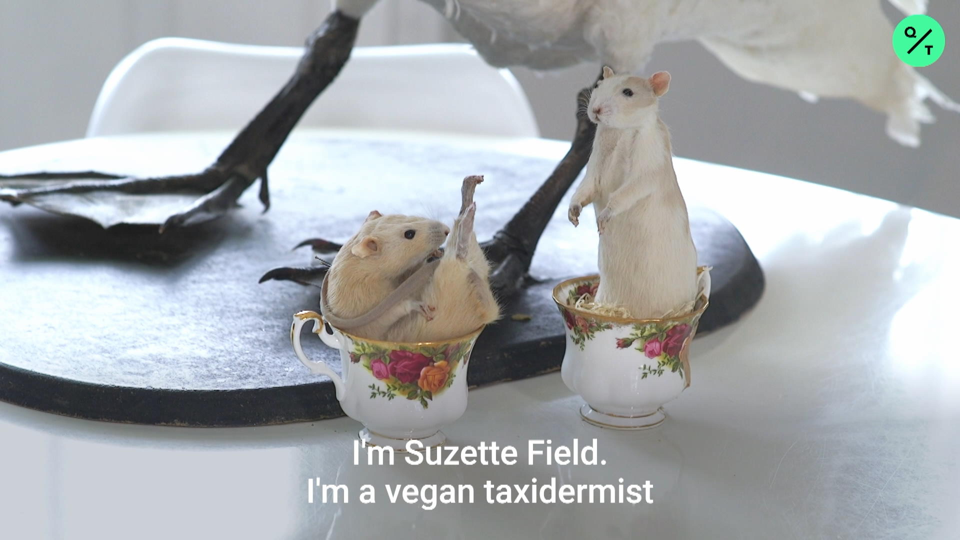 The Vegan Taxidermist