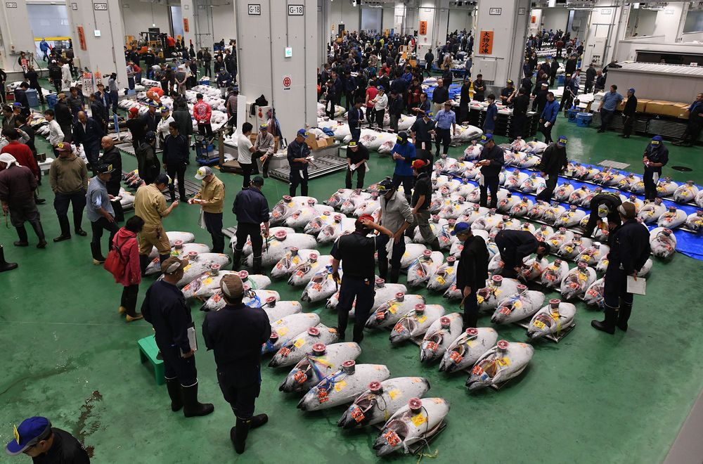 New Tokyo Fish Market Starts Traditionally With Tuna Auction - Bloomberg
