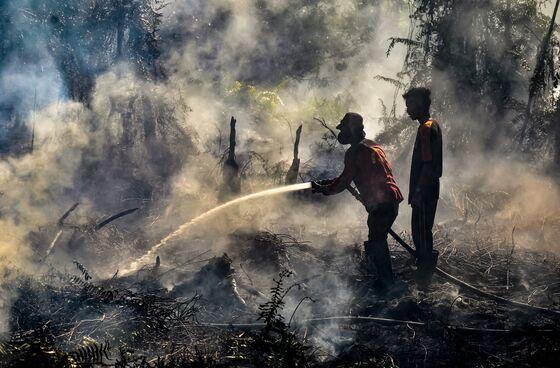 Southeast Asia Likely Spared Smoke Haze as Rain Damps Fires