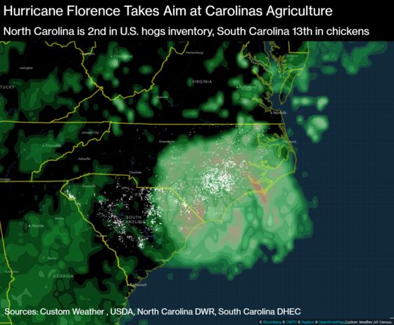 Hog Lagoons Stay Contained Amid Pelting Rains, Governor Says