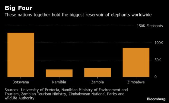 Elephants for Sale as Namibia Responds to Overcrowding