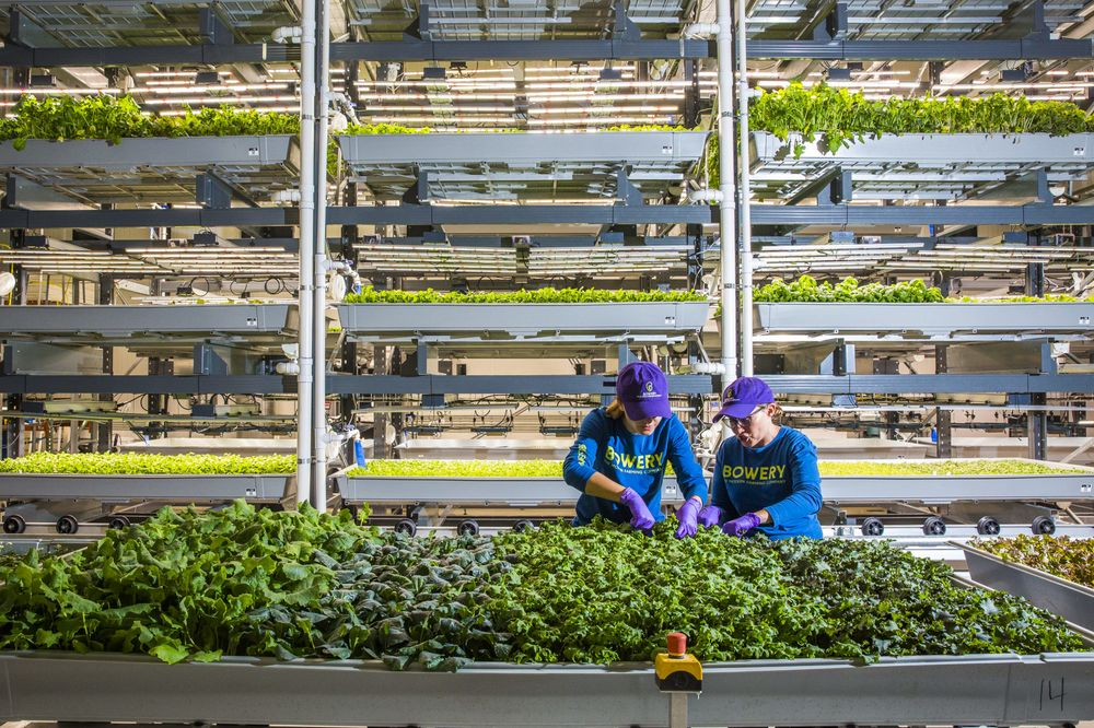 Uber CEO and Alphabet Invest in Urban Farming Startup