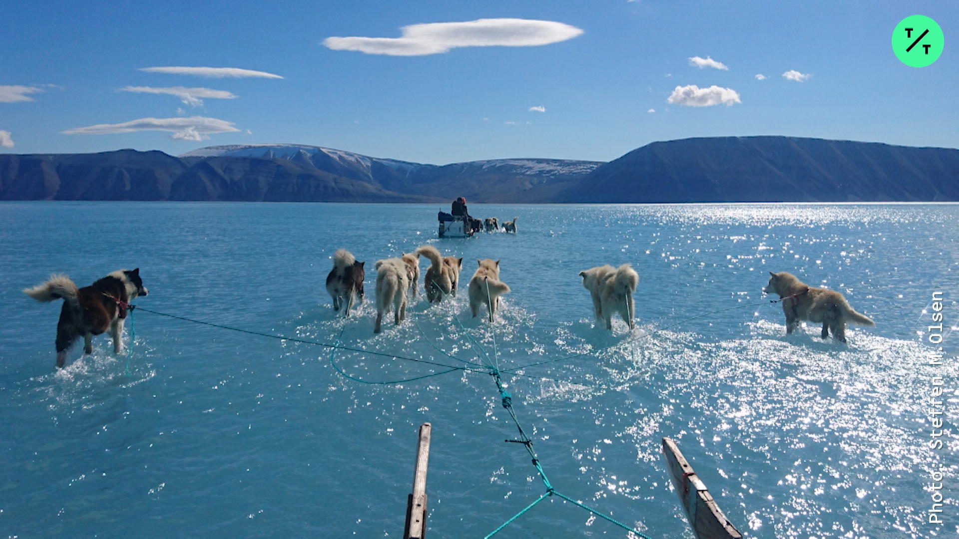 Are These Dogs Walking on Water?