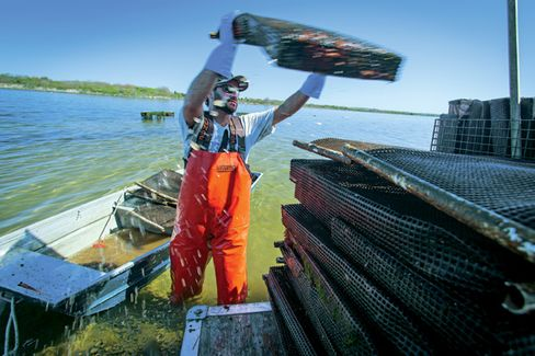 Small U.S. Oyster Farms Are on the Rise