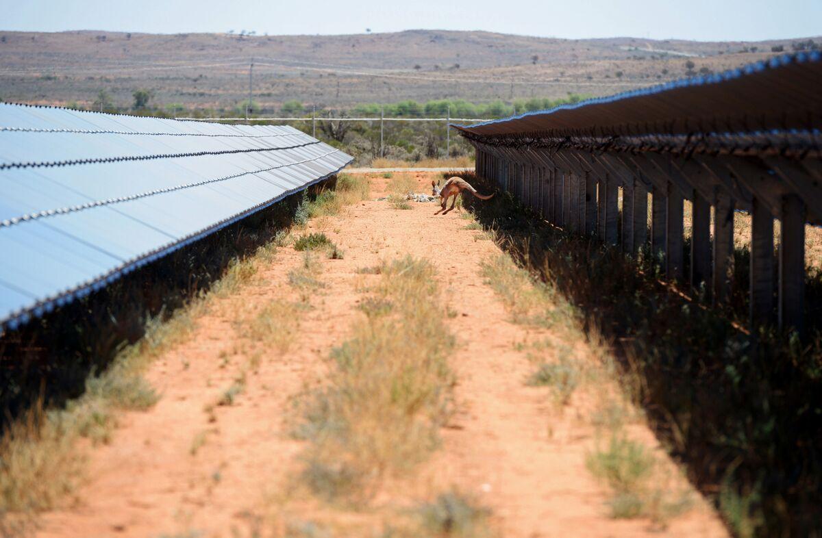 Surging Power Bills Spark Rush for Household Solar in Australia