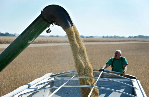 Soy Stocks Fall Most Since 1996 Amid Brazil Drought