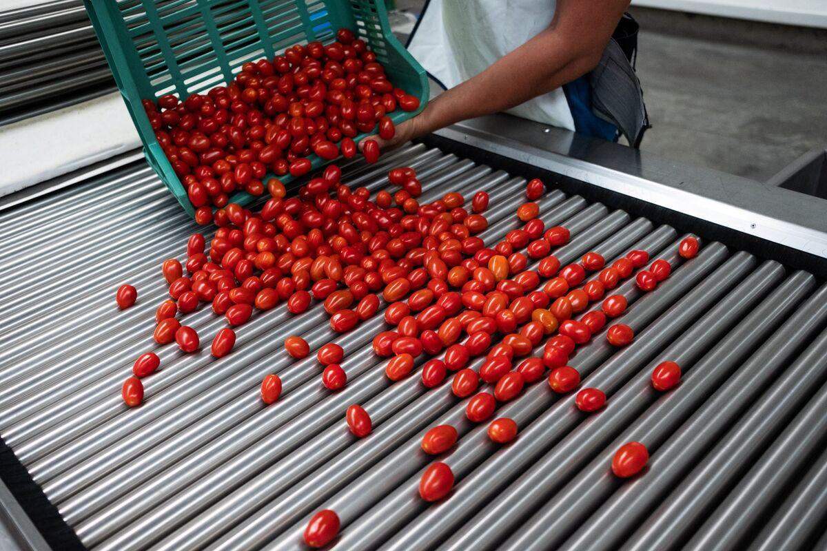 U.S., Mexico Reach Deal to Suspend Tomato Tariffs