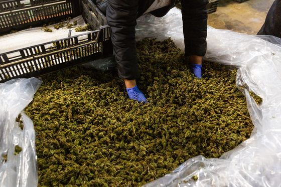 Pot Producers Are Pushing to Clamp Down on Delta-8 THC