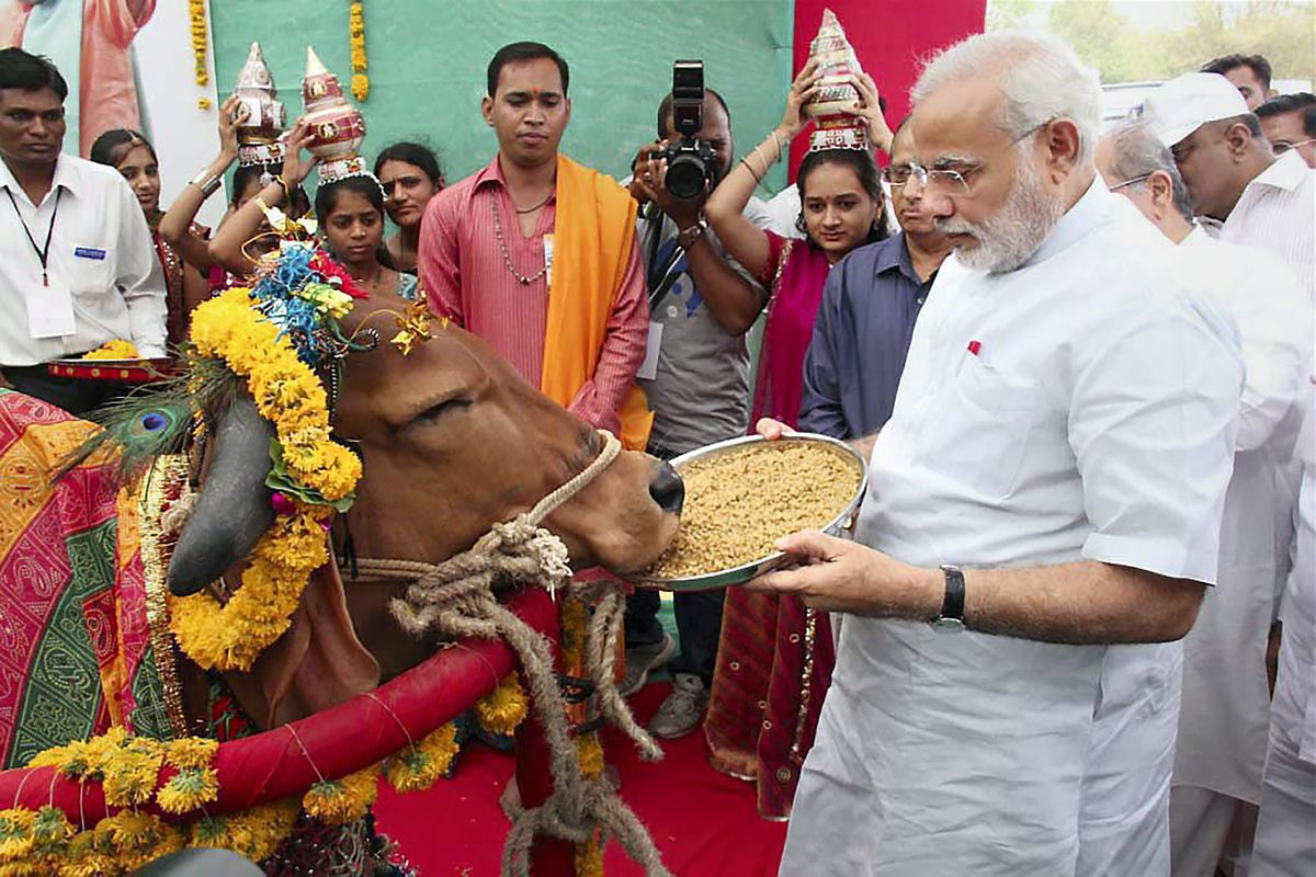 India's Sacred Cow Now Threatens an $83 Billion Dairy Industry ...