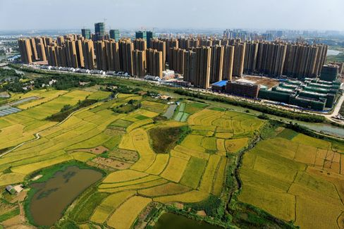 Should China Try to Feed Itself?